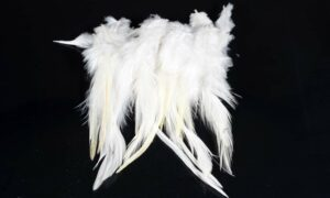 Cock Saddle Hackles – White